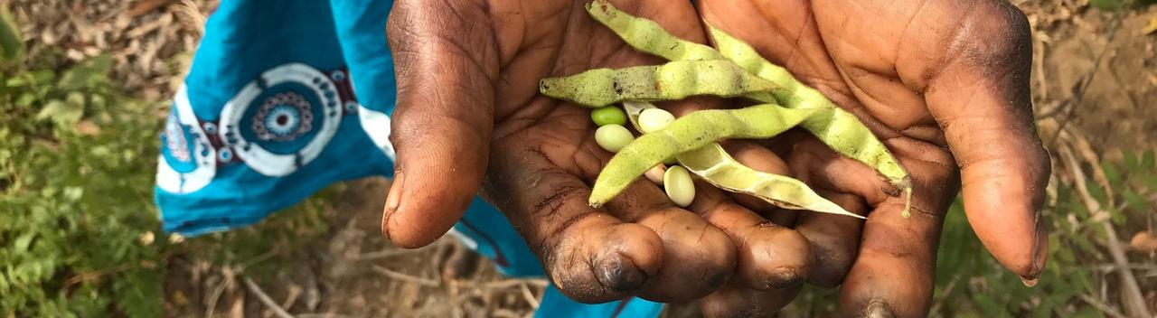 Mozambique crops