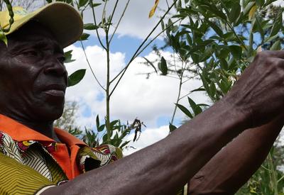 Mozambique farming