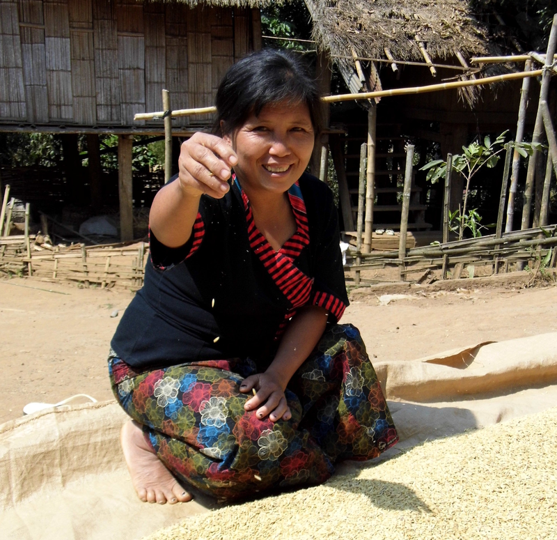 Nabo, from Myanmar, with her rice crop.